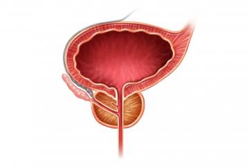 Die Prostata - Anatomie, Funktion, Erkrankung und mehr